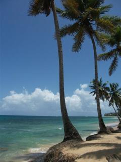 La spiaggia libera di sabbia e palme