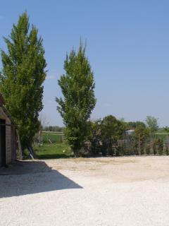 Viti e olivi sul retro della casa