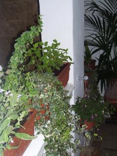 Fresh Herbs On Your Doorstep