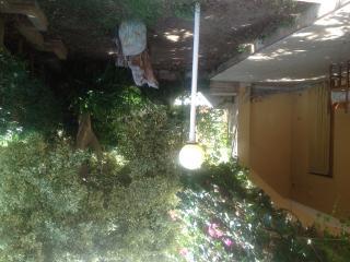 Villetta con giardino, Diamante