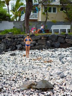 Honu on Pahoehoe Beach.  Hale Honu is in the back ground