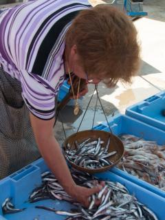 buying fresh fish from docks