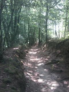 les alentours - des jolis chemins invitent pour faire des ballades