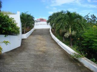 Notre allée ,bordée de palmiers, qui méne au Gite Bleu