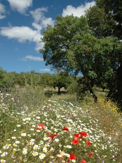 The Alentejo in Bloom