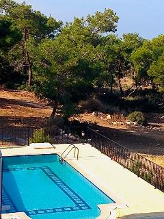 Pool with pine trees