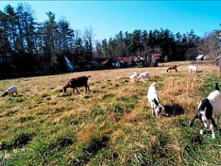 Conoce a tus vecinos - las cabras - en Trillium en lago Highland