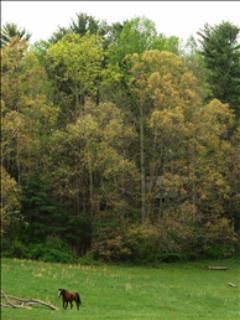 The North Pasture at Highland Lake