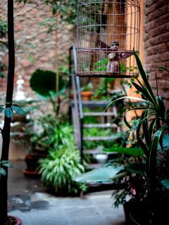 The plants of El patio 77