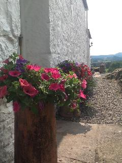 Summer flower pots in bloom August 14