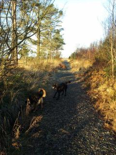 with dogs on the bog walk.....5 mins drive from home