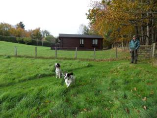 Pets are very welcome (at no extra charge) with free access to an adjacent secure field at any time