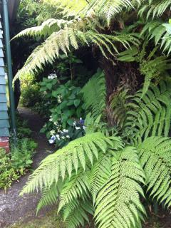 Tree ferns on the garden path
