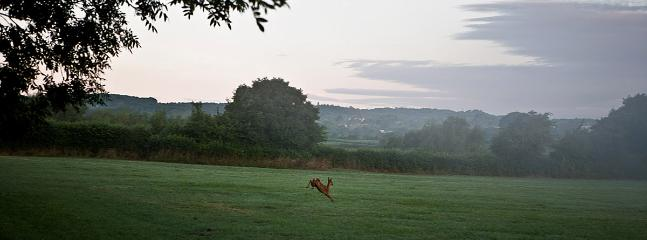 Deer running through field next to Walnut Cottage