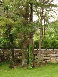 Mature trees give extra privacy