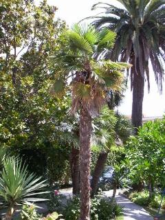 different palm trees in the garden