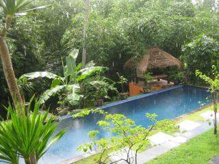 The pool is surrounded by a lush canopy of 'floodlit' trees and bamboo adjacent to the Pen