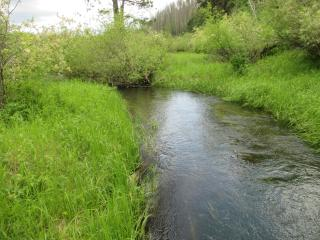 Newton Creek
