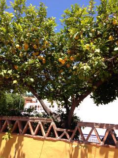 Slice of Lemon, fresh from the tree