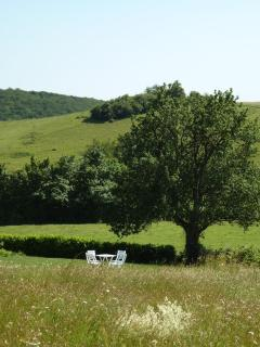Garden view with Pear Tree
