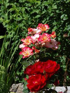 Chalet Clos Piton - vue jardin 2