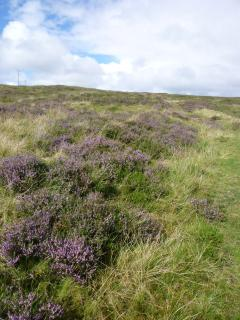 Heather moorland by river Roskhill