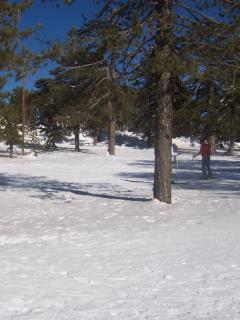 Troodos Mountains in December
