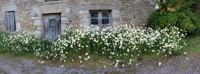 The wild fowers of Treguguet.