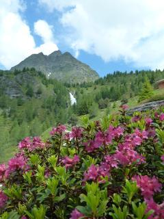 Alpen - Alps