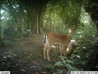 Deer are regular visitors to Stoney Hill Farm