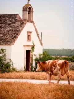 Chiesetta con mucca