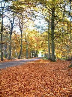 The beech avenue at Tentsmuir Forest - only 10 minutes drive.