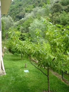 View of garden upper level