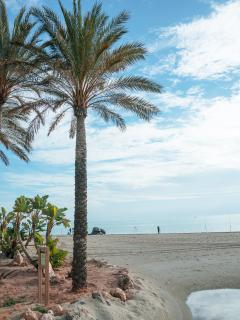 THE LOCAL AWARD WINNING NACHOS BEACH