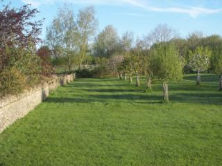 Orchard at the rear of the cottage