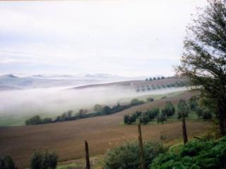 Morning mist - view from the house