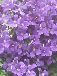 Die Blüht im Garten /  garden flowers The colours are always changing