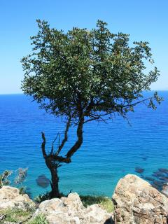 Akamas National Park - breathtaking sea views and scenery, wild flowers carpet the area in Spring