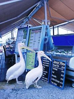 A pair of chancers eyeing the menu at the Pelican restaurant in Paphos harbour