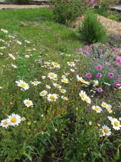 Spring flowers at La Croix