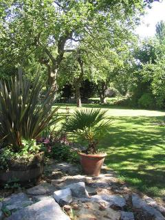 dappled shade in the lower garden