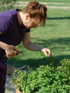 Gli ospiti possono divertirsi ad aiutarsi in varie attività: raccolta delle erbe aromatiche