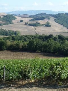 La vigna che produce il nostro vino sangiovese Igp Montecastelli : la potete visitare con noi!