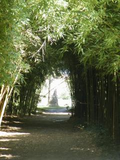 Bamboo walk at the Botanical garden