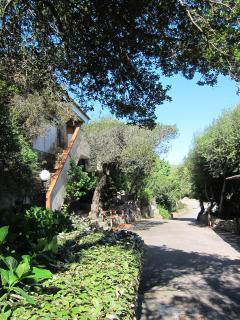 the external view from village's garden