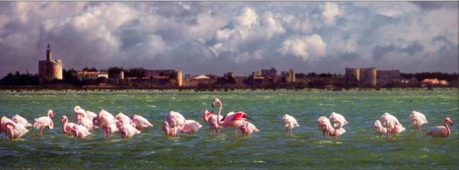 Flamingoes in front of Aigues Mortes