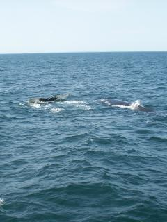 Whale-watching from April to October...