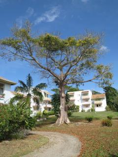 General Condominium View  with old  tree