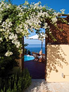 Summer flower and Greek blue