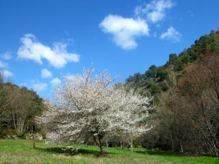 Arbousier, Caunes-Minervois